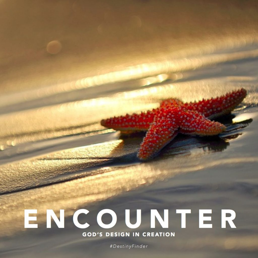Encounter God's Design in Creation